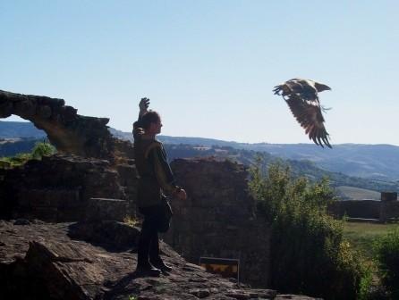 L'Aigle, majestueux, le roi des rapaces