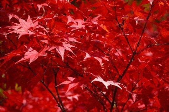 automnenippon571967.jpg