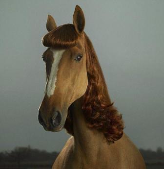 chevauxcriniereelegantel2.jpg