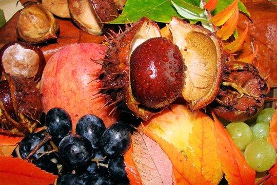 fruitsfeuillessaison646419.jpg