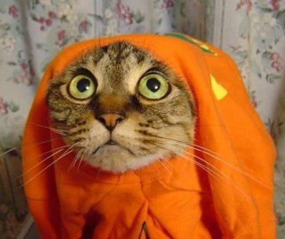 halloweenpourleschats.jpg
