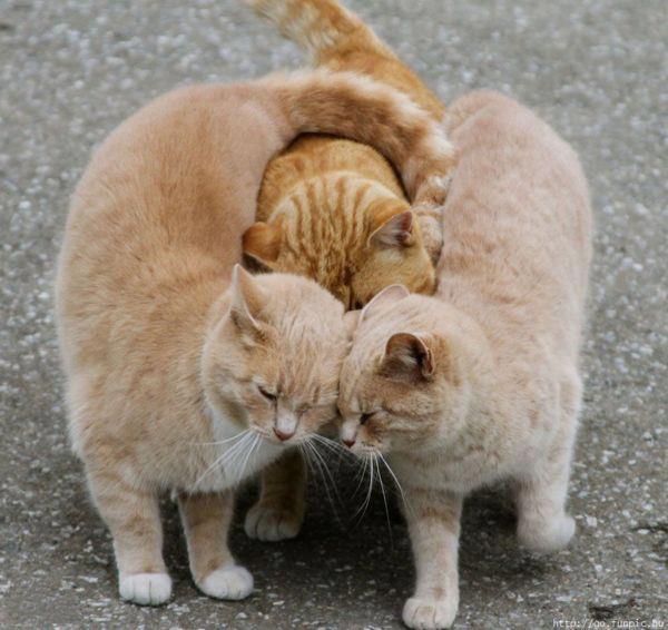 Le soutien et l'amitié, ça existe aussi chez les animaux ... :-) 419991_317345921658424_161060110620340_883534_1975586533_n